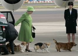 Queen Elizabeth Dogs The Queen U0027s Corgis Holly And Willow Could Be The Last For