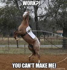 Horse Riding Meme - 10 memes that show how your horse feels about spring horse nation