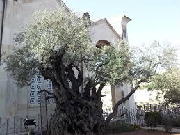 holy land tours catholic a 7 days catholic itinerary holy land tours