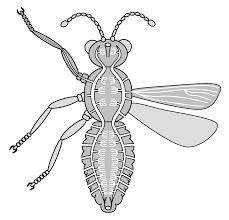 butterfly legs diagram bugs butterfly legs
