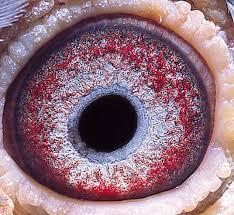 purple eye color eye colors