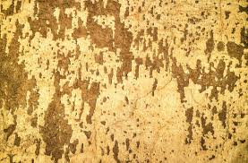 yellow grunge old painted wall texture photohdx