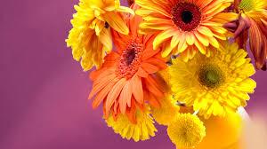 gerbera daisies 23919 1920x1080 px hdwallsource com