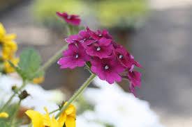 j u0026j landscaping and garden center flemington nj