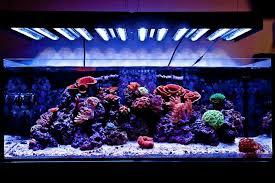 led lights for coral tanks index of wp content uploads 2011 02