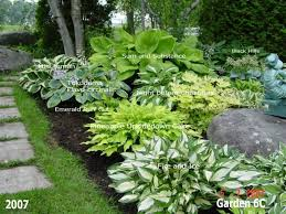332 best shade garden plants images on pinterest garden ideas