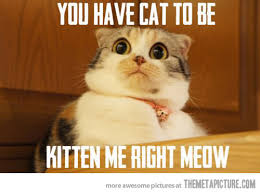 Scared Cat Meme - are you kitten me the meta picture