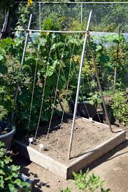 best 25 pea trellis ideas on pinterest squash varieties bean