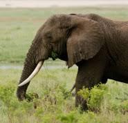 Blind Men And The Elephant Story For Children God Is An Elephant Examining The Blind Men And The Elephant
