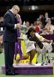 who won the dog show on thanksgiving the 140th annual westminster kennel club dog show photos abc news