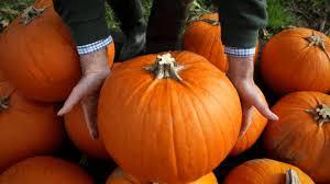 hallween pictures krispy kreme releases pumpkin spice doughnut fortune com