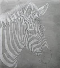 zebra u2013 charcoal drawing diane u0027s art essentials