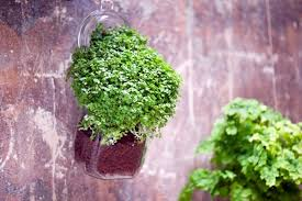 plants that grow in dark rooms indoor plants suitable for dark rooms interior design ideas avso org