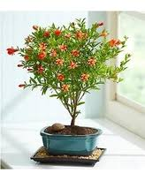 plant of the month club deal on plant of the month club 3 months per