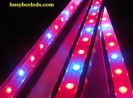 Purple Led Light Strips by Wall Led Strip Grow Lights Busy Bee Leds Busy Bee Led Lights