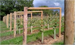 Trellis On Backyards Trendy Grape Vine Trellis 13 With 29 Building A