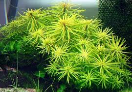 Aquascape Aquarium Plants Aquatic Eden Aquascaping Aquarium Blog