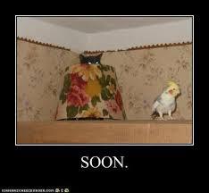 Soon Cat Meme - funny soon meme 38 pics