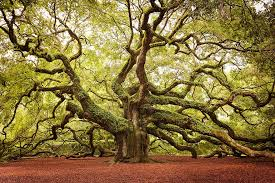 the 15 most gorgeous trees on the planet