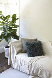 sky u0027s the limit 5 indoor plants for rooms with high ceilings