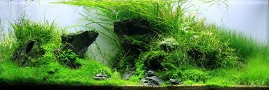 Aquascaping With Driftwood Tobias Coring And Aquascaping Aqua Rebell