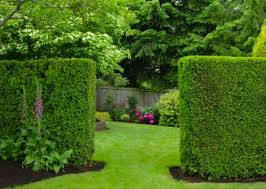 living privacy fence ideas that provide an eye catching backyard