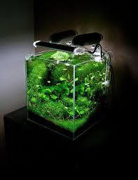 Aquascape Aquarium Designs The 25 Best Aquarium Aquascape Ideas On Pinterest Aquarium