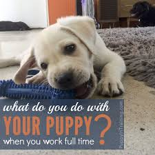 what do you do with your puppy when you work full time puppy in