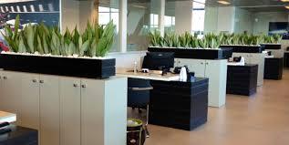 bureau vert créer un bureau vert et naturel avec ces 5 éléments essentiels