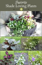the best plants for the porch simply swider porch plants