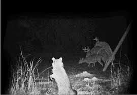 Oh Deer Meme - even the raccoon stops to say oh deer meme guy