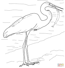 cartoon kingfisher go fishing coloring page free printable
