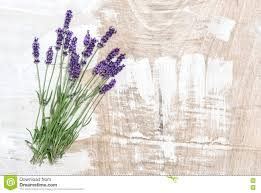 Chic Flower Lavender Flowers Wooden Background Shabby Chic Stock Photo Image