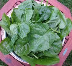 amazon com green malabar spinach 100 seeds guyana thick leaf