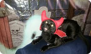 Milhouse Halloween Costume Halloween Blog
