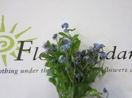 wedding florist near me 39 best blue flowers images on blue flowers wholesale