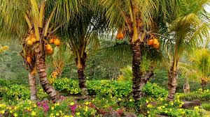 download wallpaper 1920x1080 palm trees fruits yellow trees