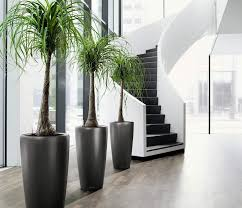 most popular indoor modern planters opinion point opinion point