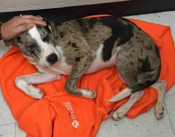 state with most dog owners 2016 rescue american humane