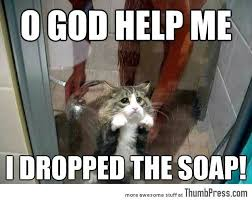 Soap Meme - o god help me i dropped the soap funny animal meme picture