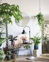 Urban Jungle Living And Styling by Amazon Com Living And Styling With Plants Urban Jungle