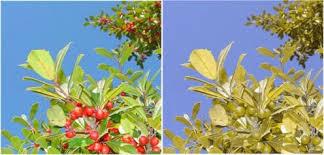 Green Red Color Blind Red Green Color Blindness Protan Deutan Rhettandlinkommunity