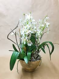 oncidium orchid white oncidium orchid in wooden bowl gardens
