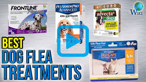 top 7 dog flea treatments of 2017 video review