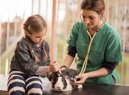 pet annual wellness paw plans brighton eggert animal clinic