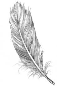 feather designs images for tatouage