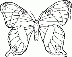 preschool coloring page pictures print animals mariposa 561467