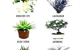 good inside plants good indoor plants for bedroom plant in bedroom good or bad org