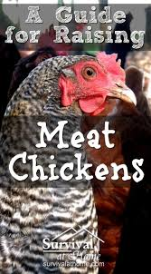 raising meat chickens a beginner u0027s guide meat purpose and raising