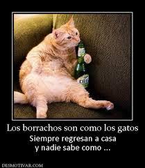 fotos graciosas de hombres borrachos mejores 39 imágenes de borrachos en pinterest borrachos chistes y